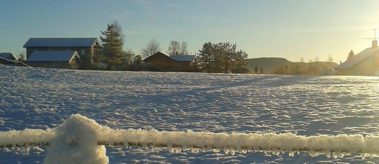 Desembermorgen i Lommedalen